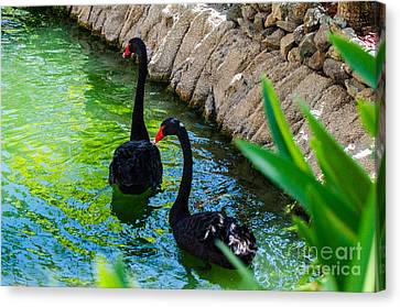 Follow The Leader Canvas Print by Judy Wolinsky