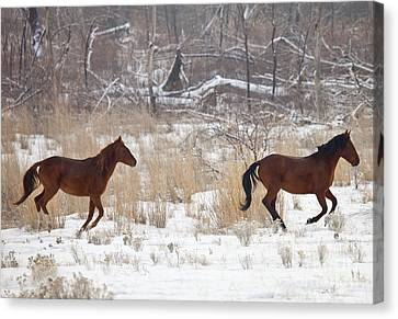 Follow The Leader Canvas Print by Mike  Dawson