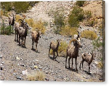 Follow The Leader Canvas Print by Tammy Espino