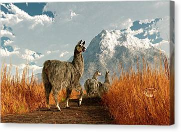 Follow The Llama Canvas Print by Daniel Eskridge