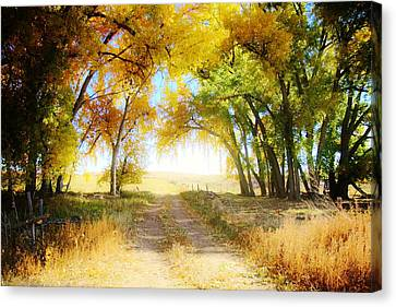 Canvas Print featuring the photograph Follow Your Heart by Shirley Heier