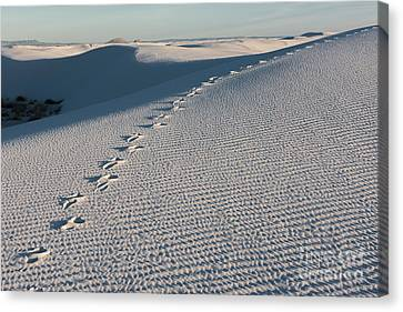 Foot Prints In The Sands Canvas Print