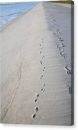 Footprints And Pawprints Canvas Print