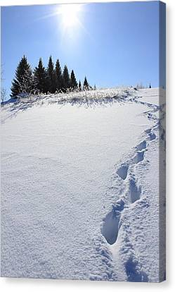 Footprints In The Snow Canvas Print by Penny Meyers