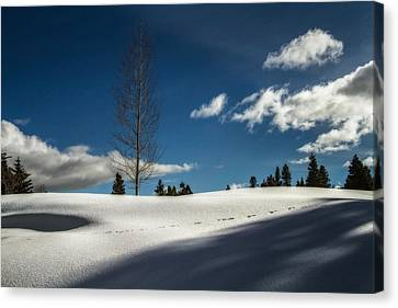 Footprints In The Snow Canvas Print by Randy Wood