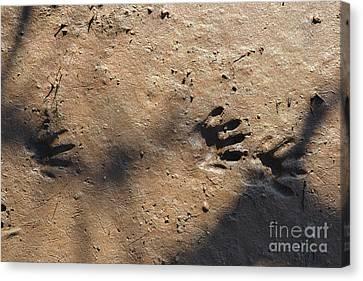 Footprints2 Canvas Print