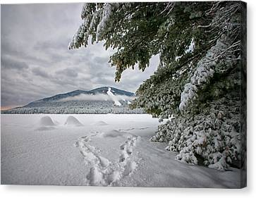 Maine Winter Canvas Print - Footsteps To The Mountain by Darylann Leonard Photography