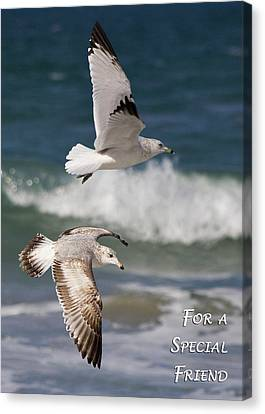 For A Special Friend Canvas Print by Dawn Currie