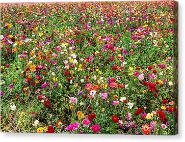 For As Far As The Eye Can See Canvas Print by Heidi Smith