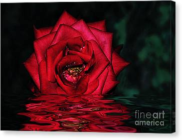 For Lovers Of Rich Red... Canvas Print by Kaye Menner