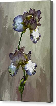 For The Love Of Iris Canvas Print by Diane Schuster
