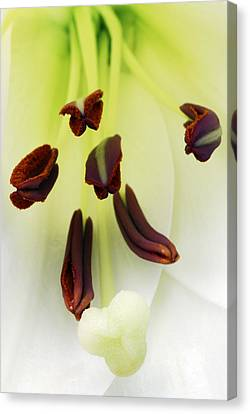 Canvas Print featuring the photograph For The Love Of Lilies 1 by Wendy Wilton