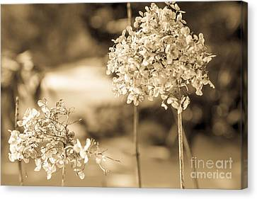 For You Canvas Print by Sue OConnor