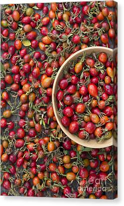Wooden Bowls Canvas Print - Foraged Rose Hips by Tim Gainey