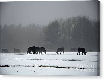 Canvas Print featuring the photograph Foraging by Glenn Gordon