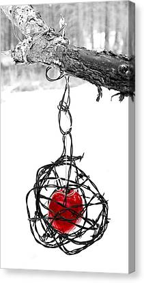 Barbed Wire Canvas Print - Forbidden Fruit by Aaron Aldrich