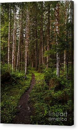Forest Alder Path Canvas Print by Mike Reid