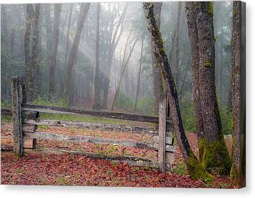 Forest And Fence Canvas Print