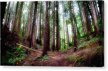 Canvas Print featuring the photograph Forest by Adria Trail