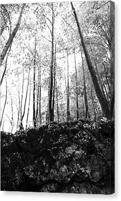 Forest Black And White 7 Canvas Print by Falko Follert