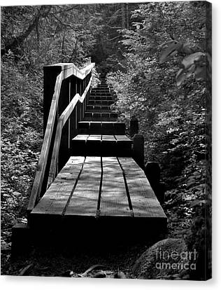 Forest Boardwalk Canvas Print