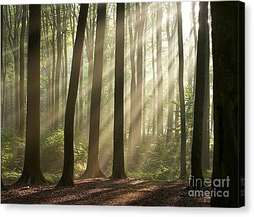 Forest Canvas Print by Boon Mee