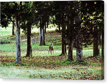 Forest Buck Canvas Print by Lorna Rogers Photography