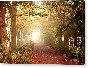 Canvas Print featuring the photograph Forest Colors by Boon Mee