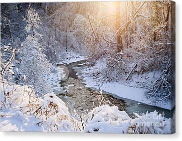 Forest Creek After Winter Storm Canvas Print by Elena Elisseeva