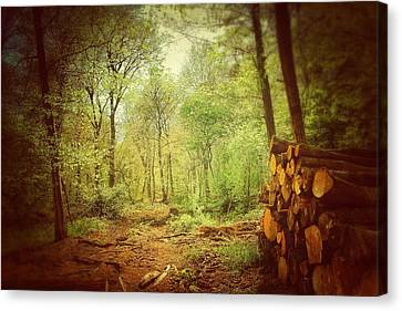 Forest Canvas Print by Daniel Precht