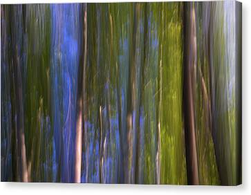Forest Dreams Canvas Print by Guido Montanes Castillo