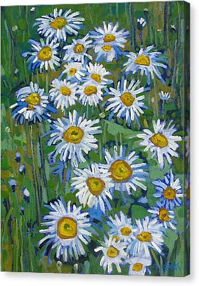 Forest Edge Daisies Canvas Print