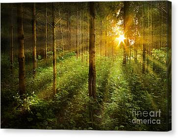 Forest Fairytale Canvas Print by Bernadett Pusztai