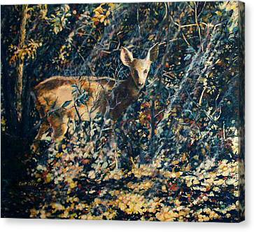 Forest Fawn Canvas Print by Dan Terry