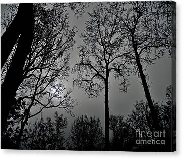 Forest Fingers Canvas Print