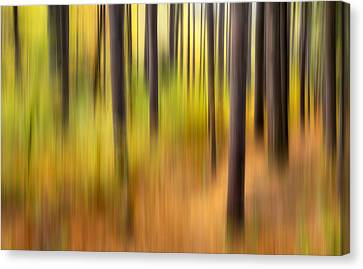 Forest Fire Canvas Print by Bill Wakeley
