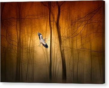 Forest Flight Canvas Print
