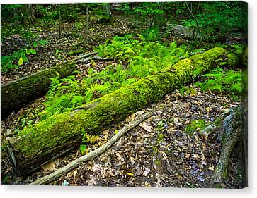 Forest Floor Gosnell Big Woods Canvas Print by Tim Buisman