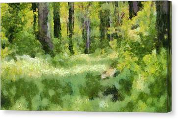 Forest Floor In Summer Canvas Print by Dan Sproul