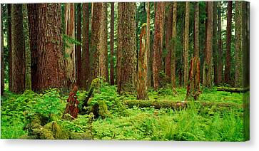Forest Floor Canvas Print - Forest Floor Olympic National Park Wa by Panoramic Images