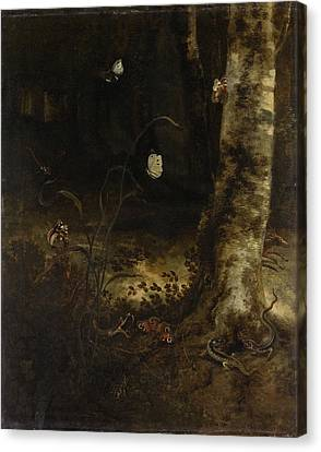 Forest Floor With A Snake, Lizards, Butterflies And Other Canvas Print by Litz Collection