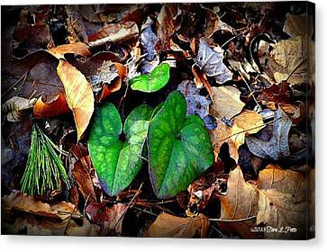 Canvas Print featuring the photograph Forest Flora by Tara Potts
