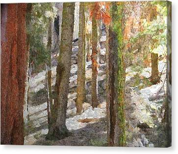 Forest For The Trees Canvas Print by Jeff Kolker