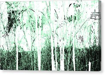 Forest For The Trees Canvas Print by Lenore Senior