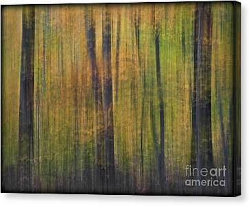 Forest Glow Canvas Print by Susan Candelario