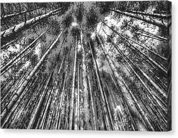 Forest Guards Canvas Print by Dawn J Benko