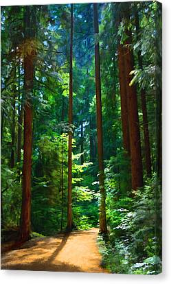 Forest Heights Canvas Print by John Robichaud