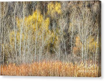 Forest In Late Fall At Scarborough Bluffs Canvas Print by Elena Elisseeva