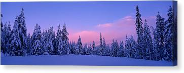 Forest In Winter, Dalarna, Sweden Canvas Print by Panoramic Images