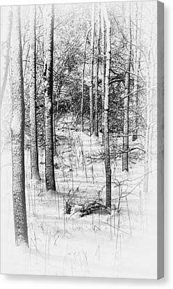 Snow-covered Landscape Canvas Print - Forest In Winter by Tom Mc Nemar